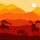 Vector landscape with elephants Stock Images