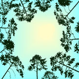 Vector landscape with sky and pine trees Stock Photography