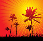 Vector landscape with trees. Sun Royalty Free Stock Image