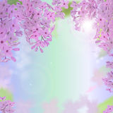 Vector las banderas del web con las flores púrpuras, rosadas, azules y blancas de la lila Fotos de archivo