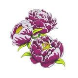 Vector las flores Imagen de archivo