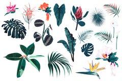 Vector las plantas, las hojas tropicales de la selva y las flores azules brillantes fijadas stock de ilustración
