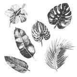 Vector las plantas tropicales dibujadas mano y la flor exótica - hojas de palma Imagenes de archivo
