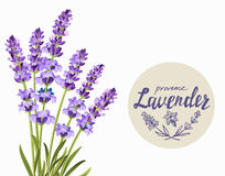Vector lavender background Royalty Free Stock Image
