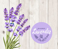Vector lavender background Royalty Free Stock Photo