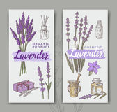 Vector lavender background Stock Photos