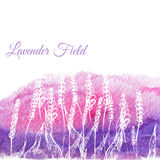 Vector lavender field on watercolor hand drawn Stock Photos