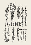 Vector lavender set Royalty Free Stock Photos