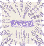 Vector lavender set Stock Photo