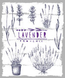 Vector lavender set Stock Photos
