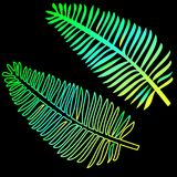 The model of the neon leaves of the fern is an exotic plant. Trend of the season is tropical leaves. Vector layout of tropical leaves close-up on a black Royalty Free Stock Images