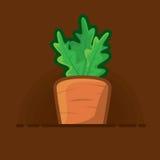 Vector le carote succose dell'illustrazione con le cime verdi dei letti crescenti Fotografie Stock