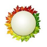 Vector le foglie di autunno del colorul e dell'insegna, progettazione di carta Immagine Stock Libera da Diritti