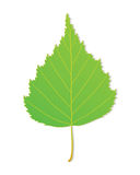 Vector Leaf Stock Photography