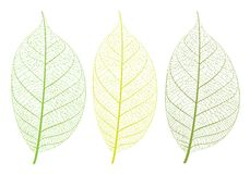 Vector leaf Stock Photos