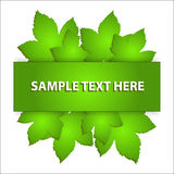 Vector leaf banner Stock Photos