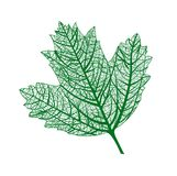 Vector leaf isolated. Natural macro leaf. Royalty Free Stock Image