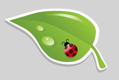 Vector leaf with ladybird. Stock Photography