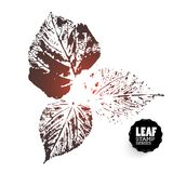 Vector leaf print variants Royalty Free Stock Photography