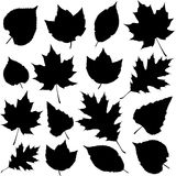 Vector leaf silhouette Royalty Free Stock Photos