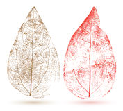 Vector leaf . Stock Photography