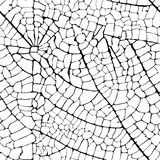 Vector leaf veins seamless texture. Graphic drawing Royalty Free Stock Photography