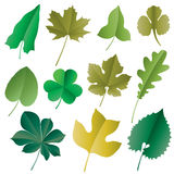 Vector leaves. Vector image of leaves isolated on white Stock Image