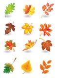 Vector leaves. Vector set of autumn leaves for design