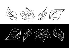 Vector leaves Royalty Free Stock Photo