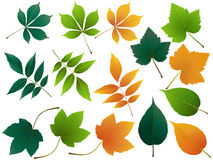 Vector leaves. Autumn leaves set, isolated on white background. simple cartoon flat style, vector illustration.  Royalty Free Stock Image