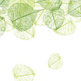 Vector leaves background Stock Images