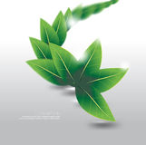 Vector leaves element ecology nature background Stock Images