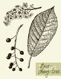 Vector leaves, flowers and fruits of the viburnum Royalty Free Stock Photography