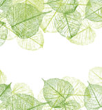 Vector leaves frame Royalty Free Stock Photos