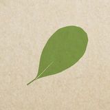 Vector leaves green grunge paper texture, distressed background Royalty Free Stock Photos