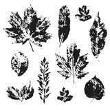 Vector leaves print set isolated. On white background. Black silhouettes of leaves. Different kind of trees leaf collection Royalty Free Stock Photography