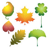 Vector leaves set Royalty Free Stock Photography