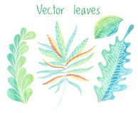 Vector leaves set, hand drawn foliage collection Stock Photography