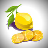 Vector lemon slices and its round shape Royalty Free Stock Image