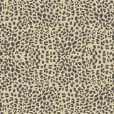 Vector leopard  background Stock Photos