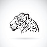 Vector of a leopard on white background. Stock Photo