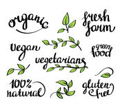 Vector lettering -  organic natural food, vegan and vegetarians menu Stock Photos