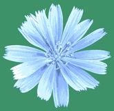 Vector light blue flower Royalty Free Stock Photo