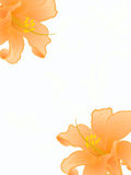 Vector lilies. Stock Image