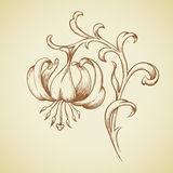 Vector lily flower. Royalty Free Stock Image
