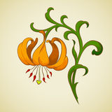 Vector lily flower. Royalty Free Stock Photos