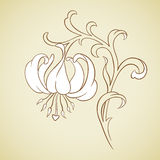 Vector lily flower. Royalty Free Stock Images