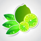 Vector lime Stock Photos