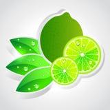 Vector lime Stock Photos