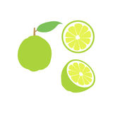 Vector lime fruit icon set. Isolated on white. A lime illustrations set with three different versions. One with a whole lime, other with a lime cut open into Royalty Free Stock Photos